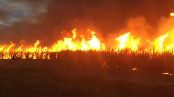 A sugar cane burn in northern NSW
