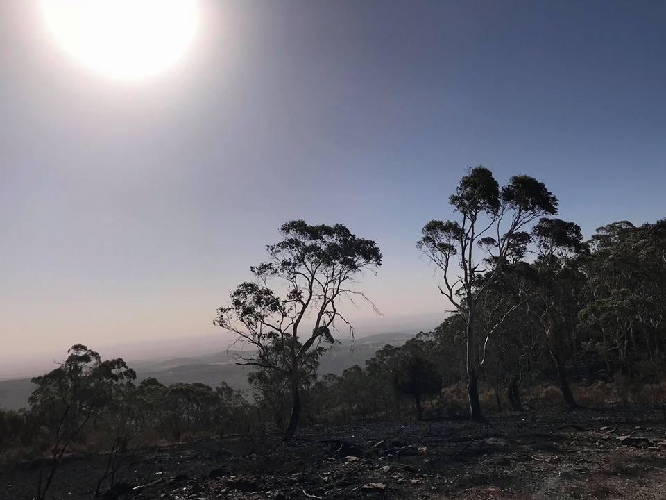 Mt Canobolas 7