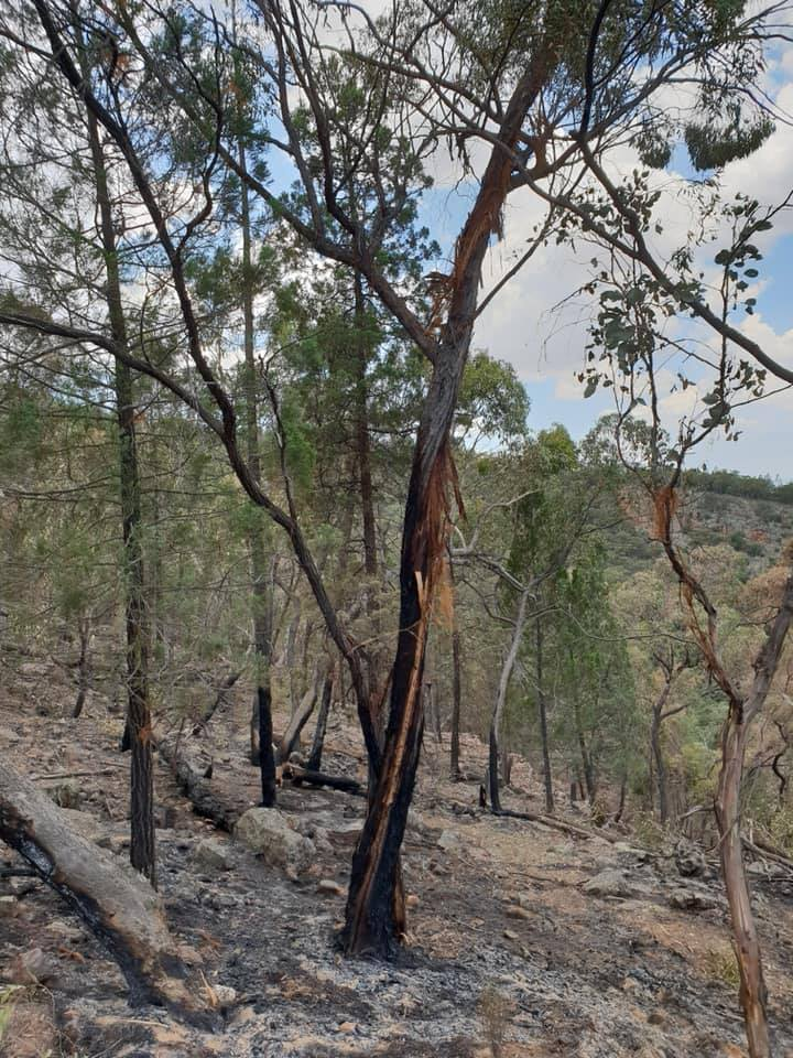 Fire Activity Update 4/1/2019 - NSW Rural Fire Service