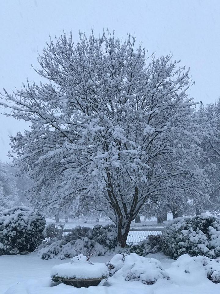 Tablelands snow 7