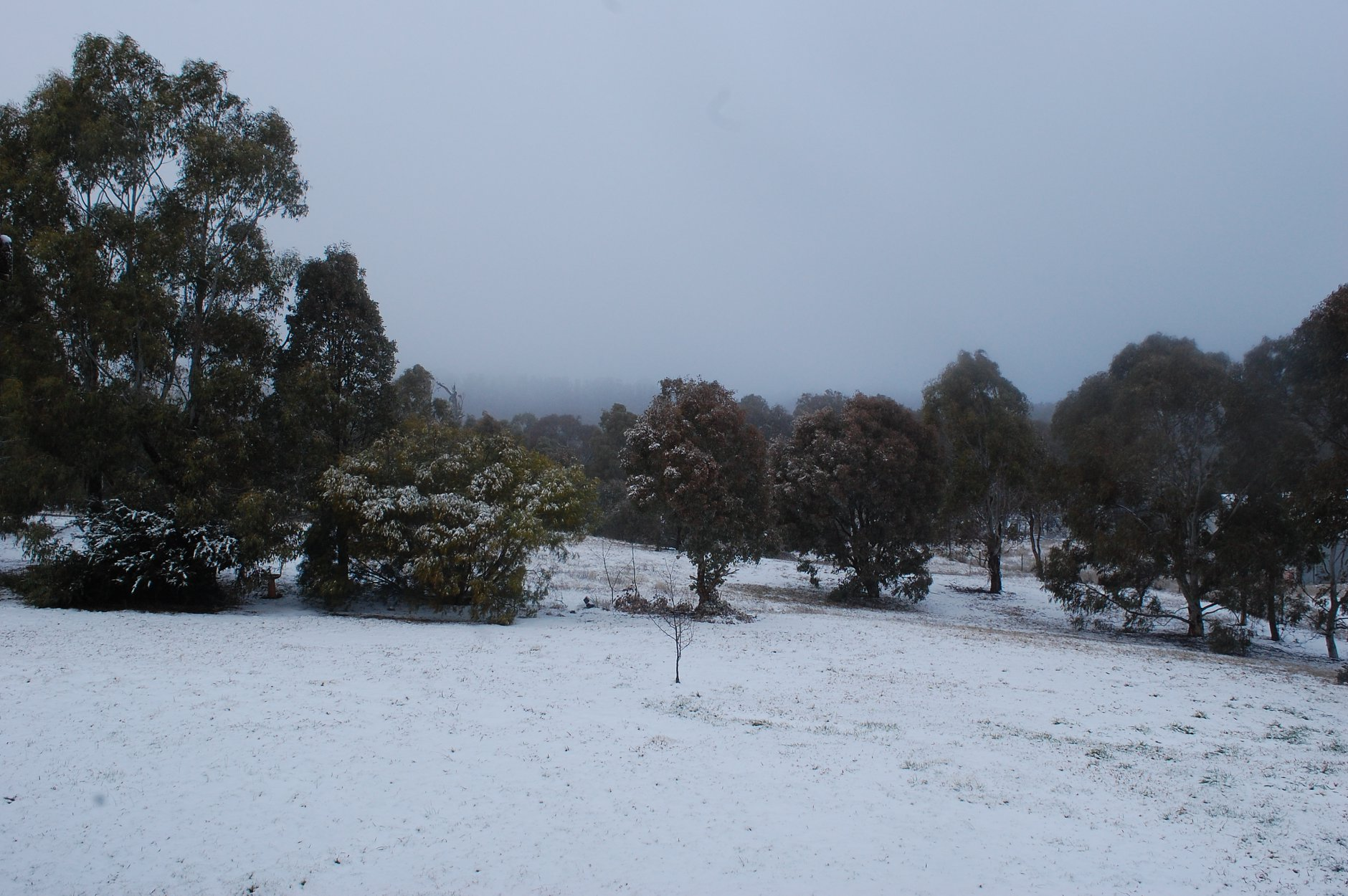 Tablelands snow 8