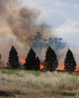 West Dubbo Rail Track fire