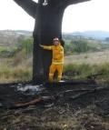 Tablelands Fires
