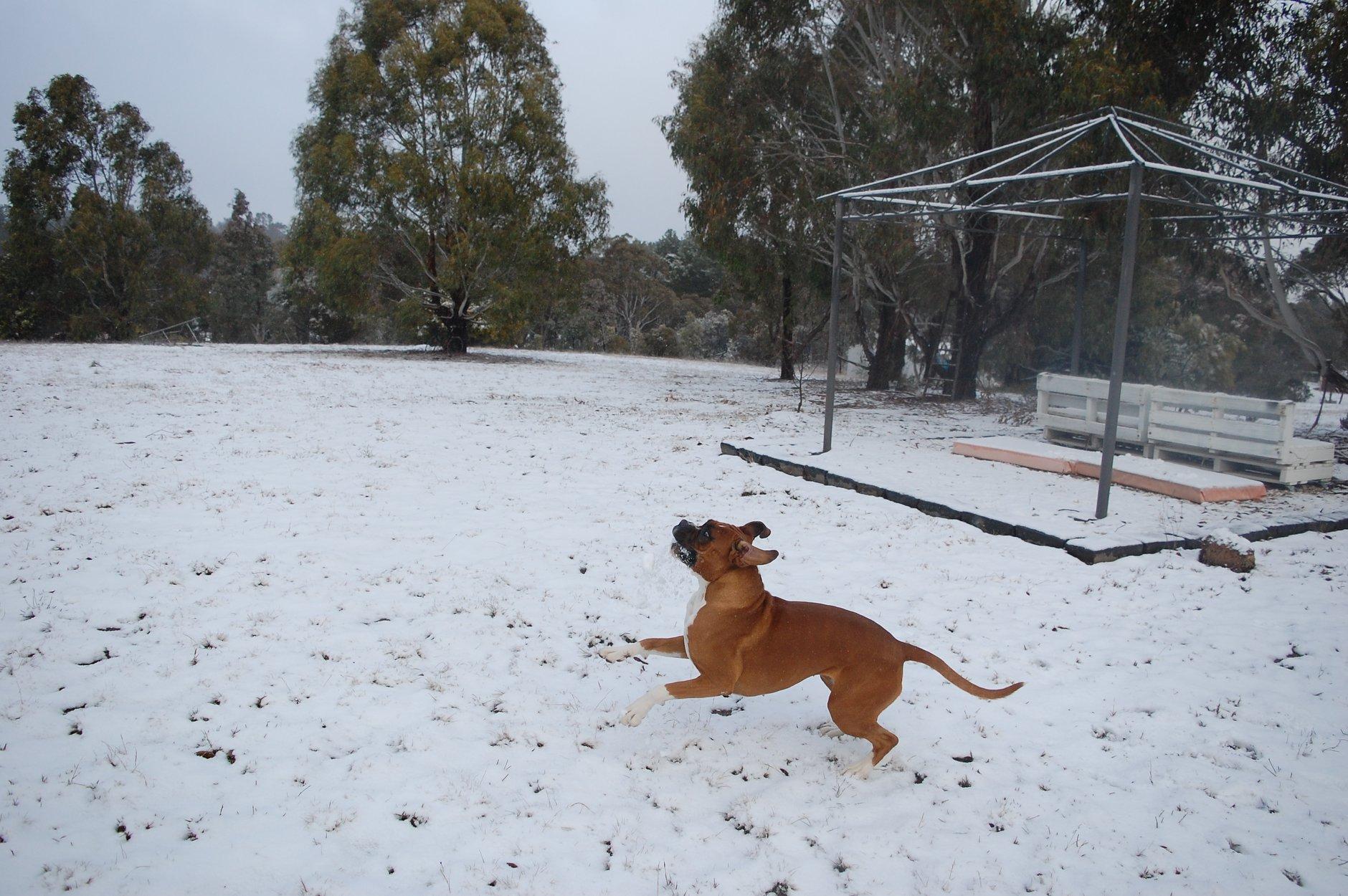 Tablelands snow 9