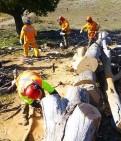 Stuart Clarke Appeal log cutting